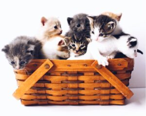 [Basket full of kittens]